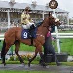 TADAANY - Horse Racing Hub