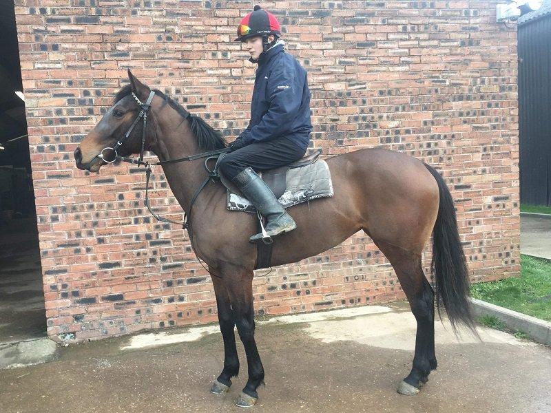 Heeraat x Dockside Strike - Horse Racing Hub