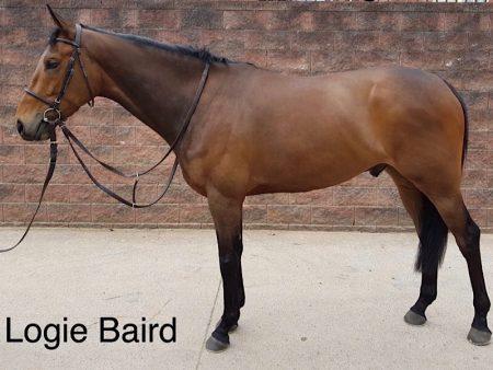 LOGIE BAIRD - Horse Racing Hub