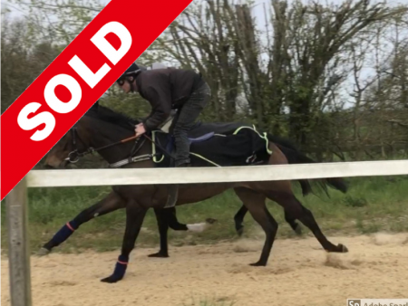 Sold Horses - Horse Racing Hub, Racehorses For Sale & Shares