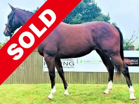 Markaz x All Fur Coat SOLD - Horse Racing Hub