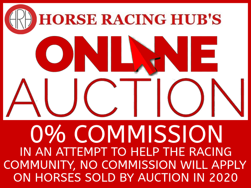 Auction - HORSE RACING HUB
